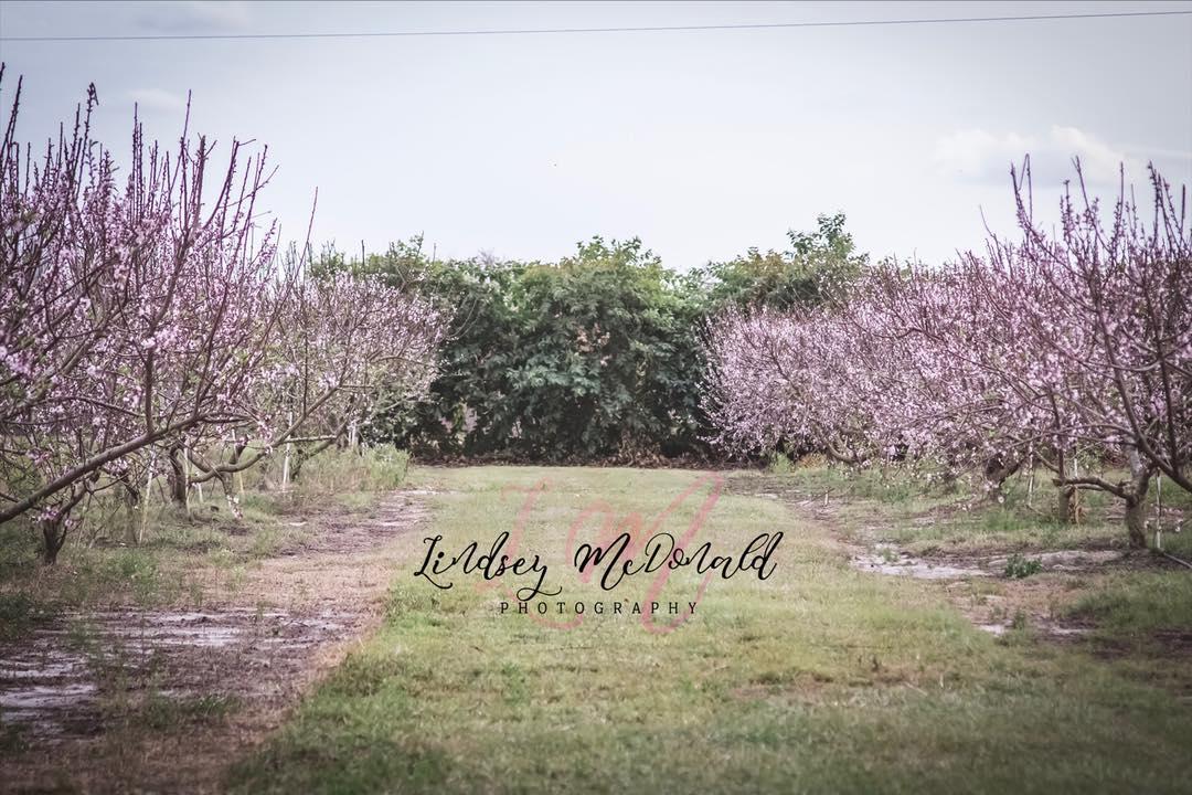 Lindsey McDonald Photography